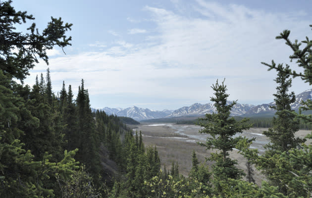 Grizzly bear kills hiker in Denali National Park