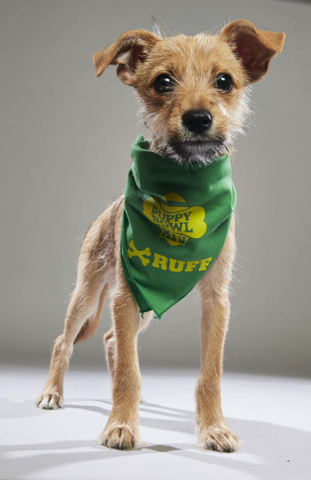 <p>Team: Ruff<br> From: Animal Friends Humane Society<br> (Photo: Animal Planet) </p>