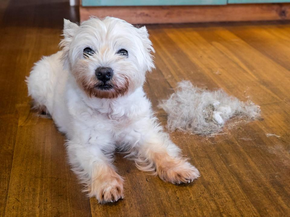 If your pet is shedding excessively, they may have a health issue or be stressed.