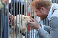 <p>Prince Harry gives a golden retriever some love during a walkabout in Sussex.</p>