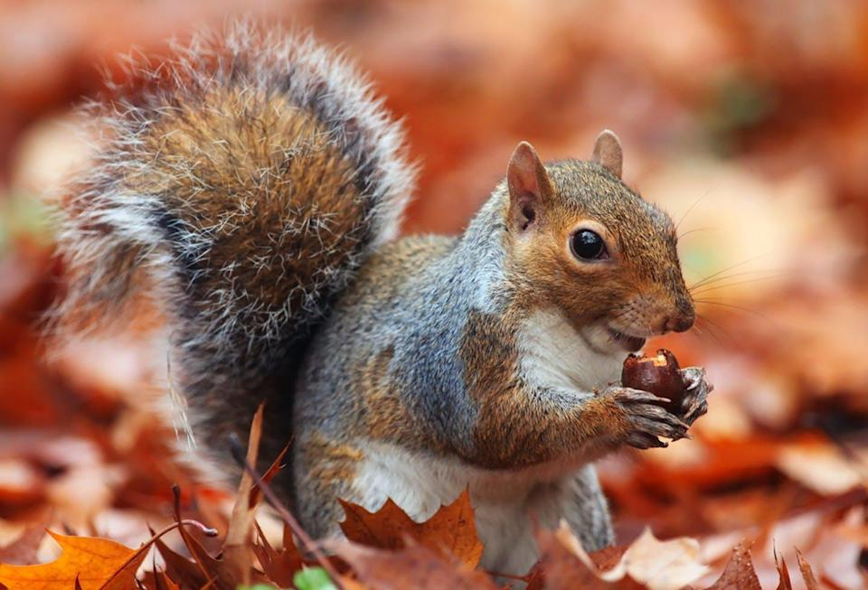 """<span class=""""caption"""">Children in a forest nature program learn about the 'mitigomin' (red oak acorns) not buried by the 'miadidamoo' (eastern grey squirrels).</span> <span class=""""attribution""""><span class=""""source"""">(Shutterstock)</span></span>"""