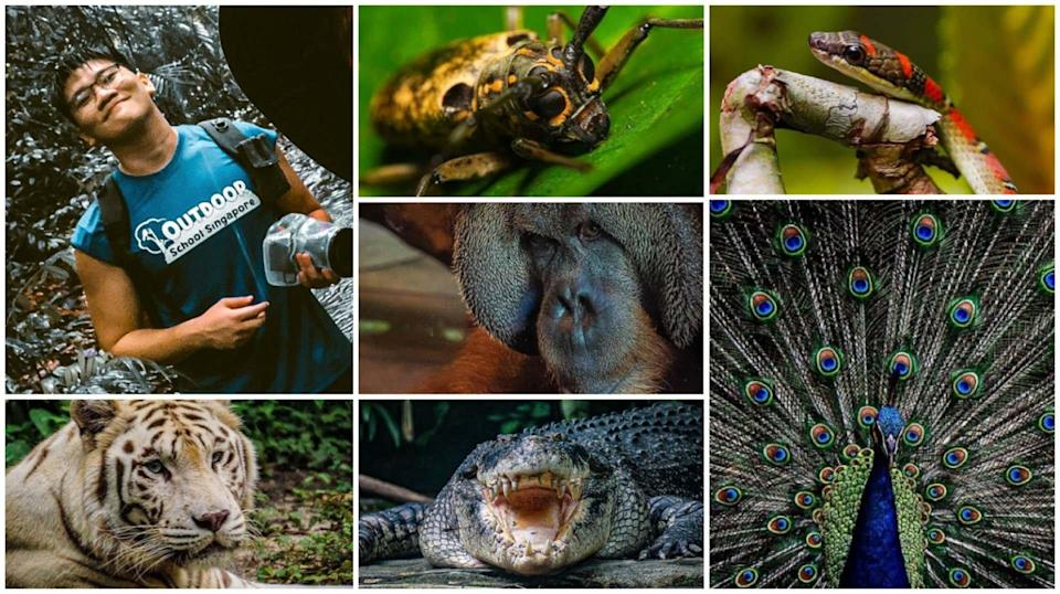 Wildlife photographer and educator Isaac Sim is on a mission to spread awareness of wildlife conservation.