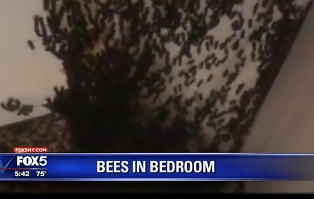 After a year of random bee deaths in her bedroom, one US woman was horrified to find 35,000 of them in ceiling. Photo: FOX5NY