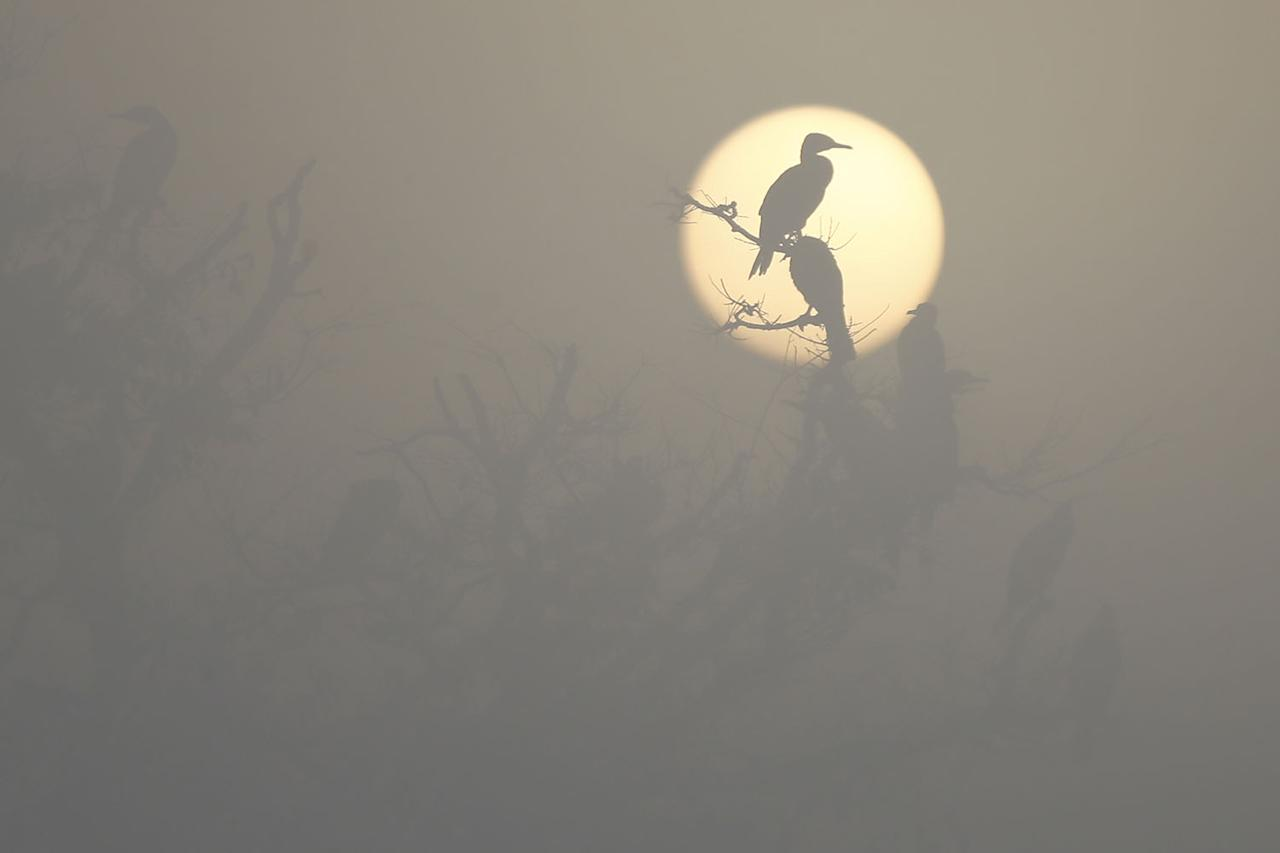 <p>Migratory birds are silhouetted against the sunrise as they perch on tree branches on a misty morning at Taudaha Lake near Kathmandu, Nepal, on Jan. 5, 2017. (Photo: Skanda Gautam/ZUMA Wire) </p>