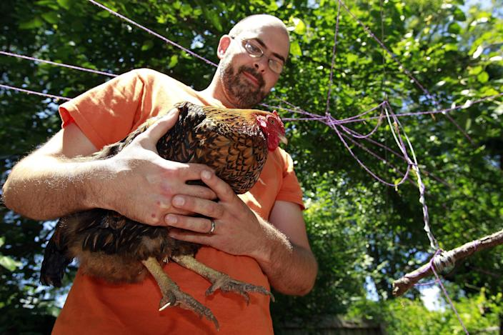 """Jonah McDonald holds one of his chickens at his Atlanta home Wednesday, May 30, 2012. McDonald teaches about chickens at an Atlanta school and says he always advises students to wash their hands after handling them. Mail-order chicks that appeal to kids and backyard farmers have been linked to the U.S.'s longest running salmonella outbreak, sickening more than 300 people - many of them young children. McDonald said he doesn't know of anyone who's gotten salmonella from handling chickens. """"The kids in my neighborhood come over and feed scraps into the cages,"""" he added. """"It's a real community thing."""" (AP Photo/John Bazemore)"""