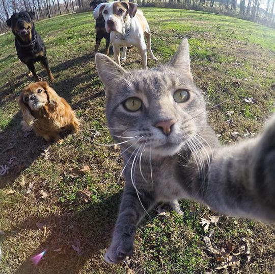 "<p>Yes, he really pushes the camera button on his own. According to his owner, the snap-happy pet learned to press the button on a Go Pro, and the rest is Instagram (and viral Internet) history. <i>(Photo: <a href=""https://www.instagram.com/yoremahm/"" rel=""nofollow noopener"" target=""_blank"" data-ylk=""slk:Instagram.com/Yoremahm"" class=""link rapid-noclick-resp"">Instagram.com/Yoremahm</a>)</i></p>"