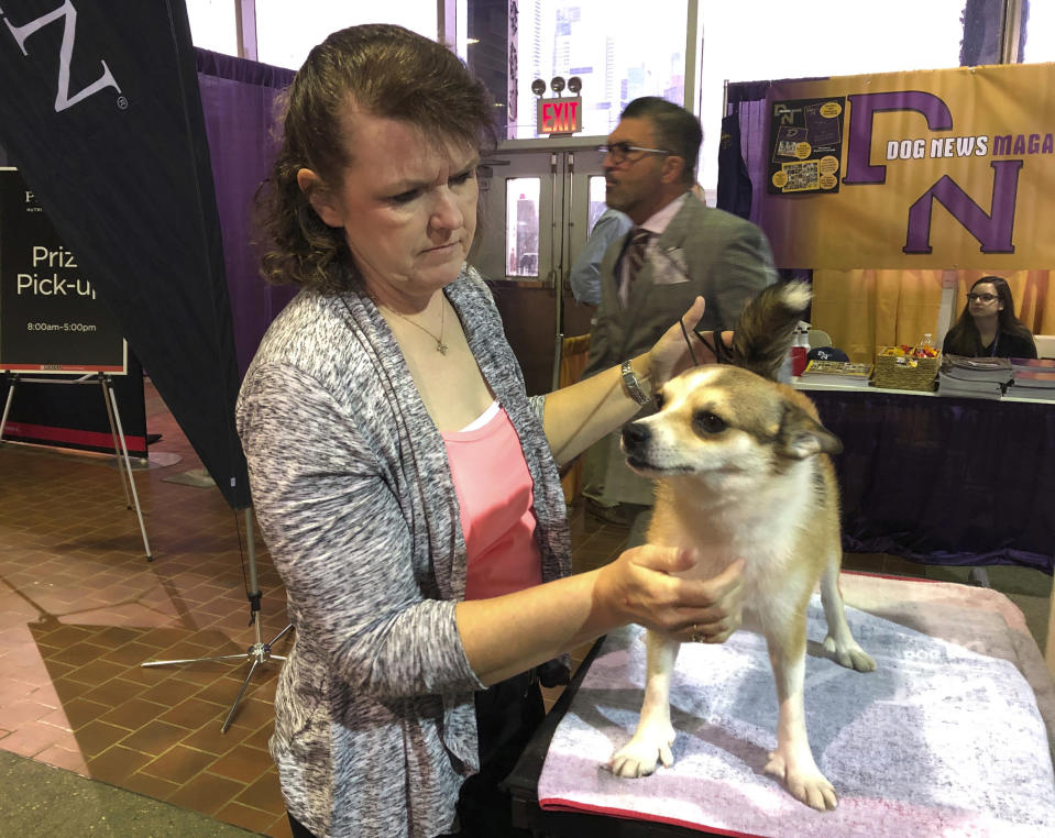 FILE - In this Feb. 11, 2019, file photo, Tracy Rousseau of Franktown, Colo., pets Eva, a Norwegian lundehund, as they wait to compete at the Westminster Kennel Club dog show in New York. Rousseau, her husband, Peter, and their dogs are not going to make it to the upcoming Westminster show, partly because of complexities arising from the coronavirus pandemic. (AP Photo/Jennifer Peltz, File)