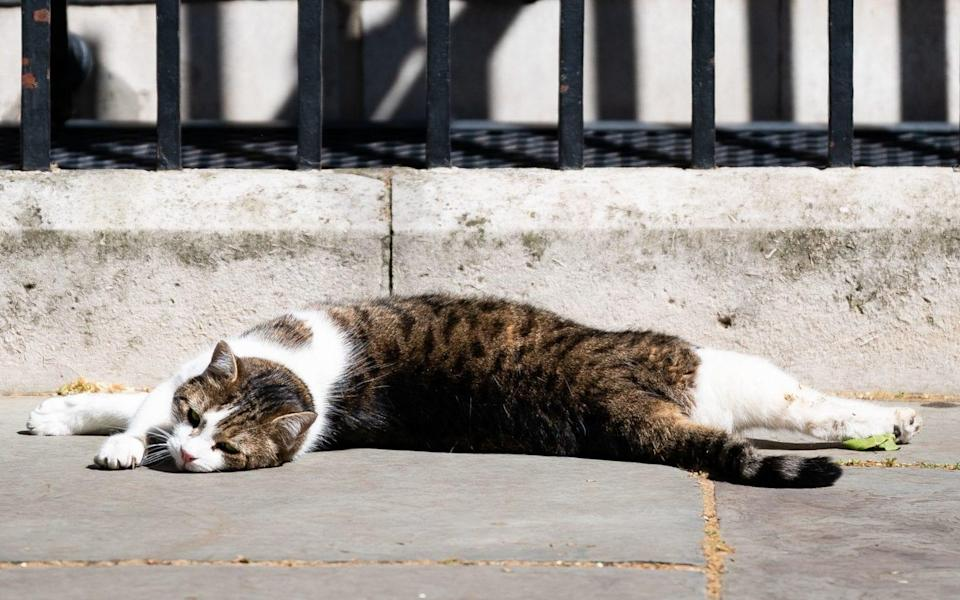One of Britain's most well known felines, Larry the Downing Street cat - PA