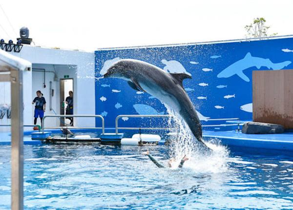▲ This is the view from the front row. Seeing dolphins up this close is really exciting!