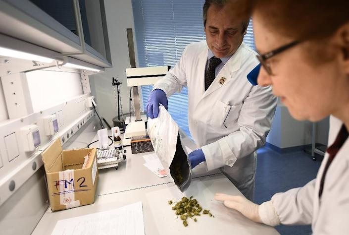 An estimated 2,000-3,000 Italians currently use medical cannabis for purposes such as relief from multiple sclerosis pain or combatting nausea after chemotherapy (AFP Photo/FILIPPO MONTEFORTE)