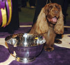FILE - Stump, a Sussex spaniel, poses for pictures after winning Best in Show during the 133rd annual Westminster Kennel Club dog show in New York, in this Tuesday, Feb. 10, 2009, file photo. Retired from the ring for five years, it was just five days before the show when handler Scott Sommer thought Stump might like to take one final walk at the Garden. (AP Photo/Peter Kramer, File)