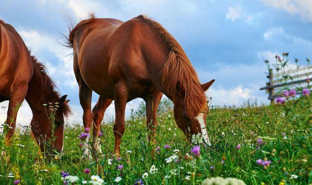 France: Horses killed in mysterious ritual-like mutilations