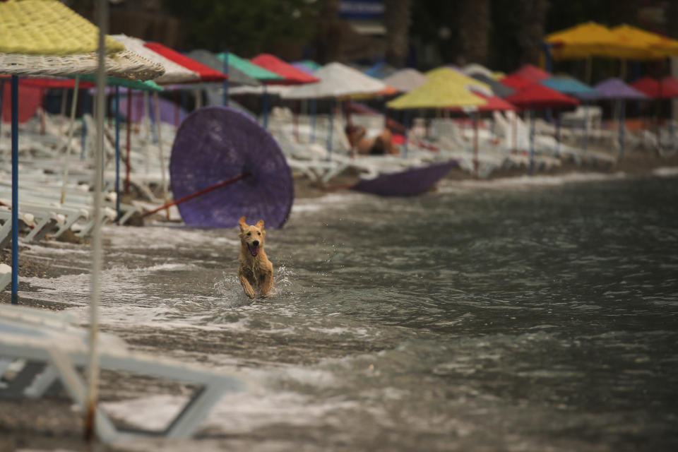 A dog enjoys the water on the Oren beach near the Kemerkoy Power Plant, a coal-fueled power plant, in Milas, Mugla in southwest Turkey, Thursday, Aug. 5, 2021. A wildfire that reached the compound of a coal-fueled power plant in southwest Turkey and forced evacuations by boats and cars, was contained on Thursday after raging for some 11 hours, officials and media reports said. (AP Photo/Emre Tazegul)