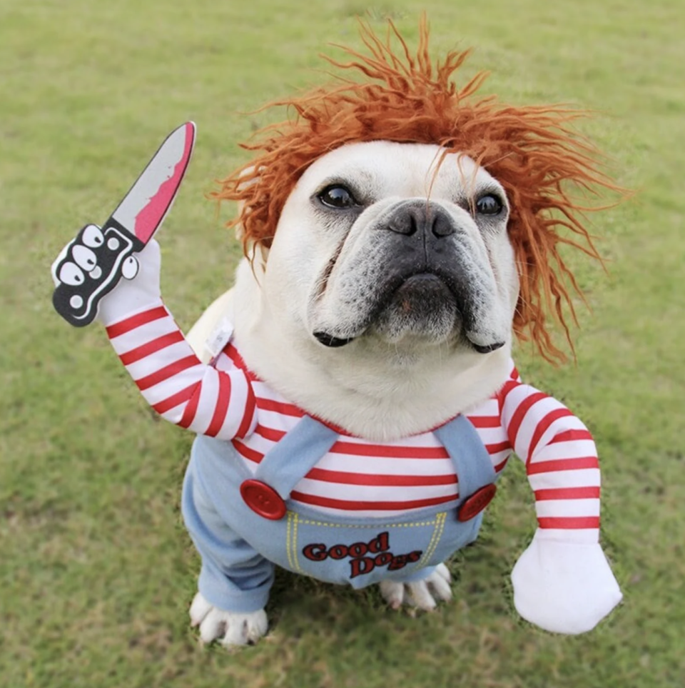 white puppy wearing Chucky Pet Costume with bloody knife and red head wig