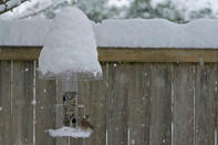 A bird eats seeds out of snow-covered feeder, Saturday, Feb. 13, 2021, in Olympia, Wash. Some areas of the Puget Sound area got more than a foot of snow Saturday, and winter weather is expected throughout the Seattle region through the weekend. (AP Photo/Ted S. Warren)