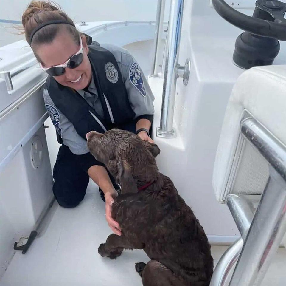 Retriever Puppy Swept Away from Beach, Rescued by Marine Police