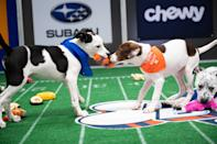"<p>Let's get 2021 off to a Ruff start. And a Fluff one. It is time to reveal the pupticipants in <a href=""https://www.discovery.com/shows/puppy-bowl/puppy-bowl-xvii/vote"" rel=""nofollow noopener"" target=""_blank"" data-ylk=""slk:Puppy Bowl XVII"" class=""link rapid-noclick-resp"">Puppy Bowl XVII</a>, which aims to provide cuddly canine comfort whilst raising awareness for pet adoption. This year's game — which, as always, features dogs scurrying around a mini-field, sorta playing football by carrying chew toys across goal lines — can be seen on Discovery+ and Animal Planet on Super Bowl Sunday (Feb. 7) at 2 p.m. ET/11 a.m. The three-hour event, which includes a Kitty Halftime Show, will see Team Ruff and Team Fluff (whose series record is tied up at 3-3) competing for the Lombarky trophy in a stadium within a stadium. Seventy puppies from 22 shelters and rescues will hit the field, with <em>Monday Night Football</em> play-by-play announcer Steve Levy and SportsCenter host Sage Steele providing commentary, referee Dan Schachner calling penalties such as ""premature watering of the field,"" and celebs including Kristen Bell and Valerie Bertinelli assisting with the adoption process. (There will be opportunities during the game to adopt dogs from 11 additional shelters.) But enough human words. Time for puppy photos. Start scrolling to pick your pre-game Most Valuable Pup. </p>"
