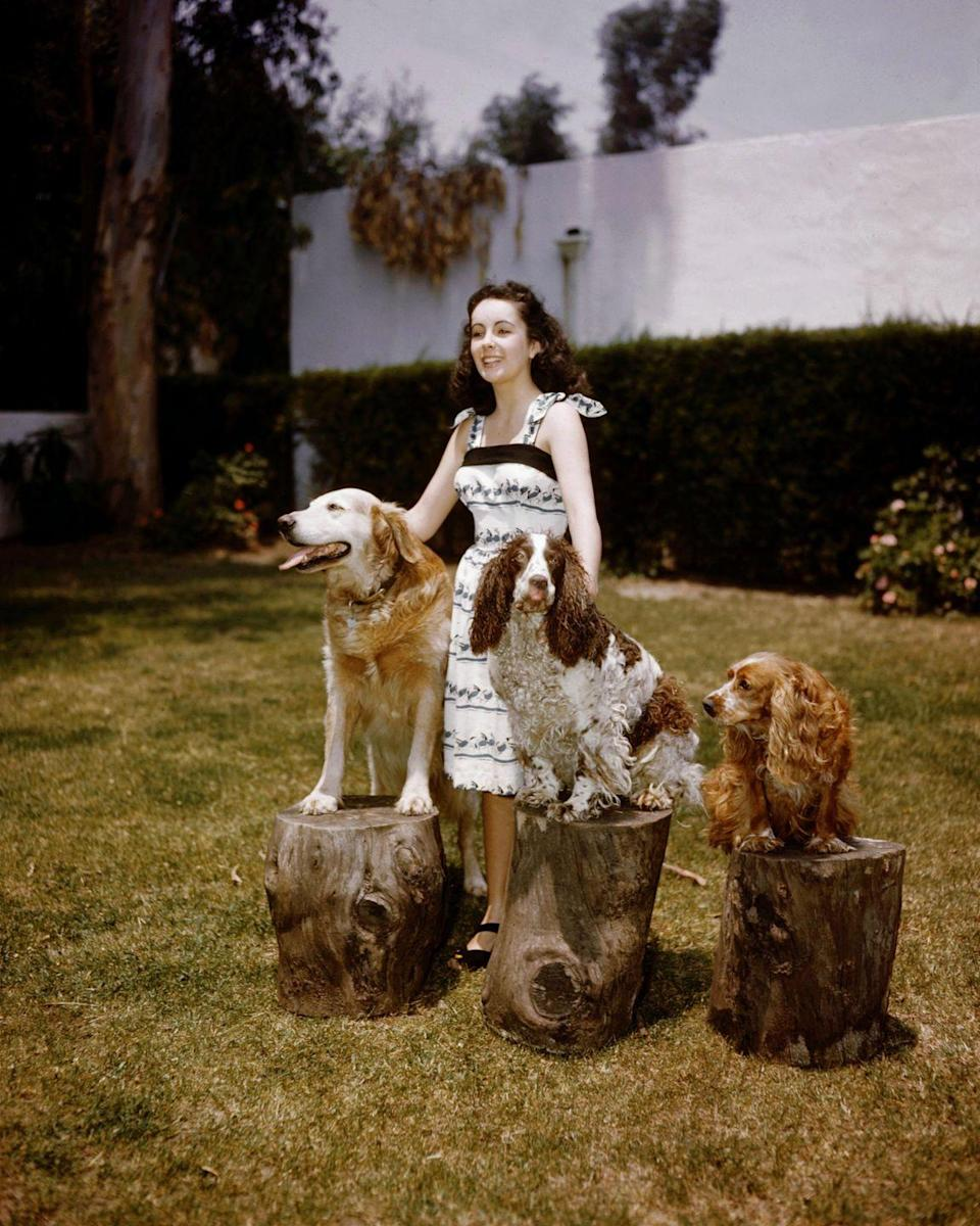 <p>Elizabeth had many pets, but here she's seen posing with three of her dogs, Twinkle, Monty, and Spot. </p>