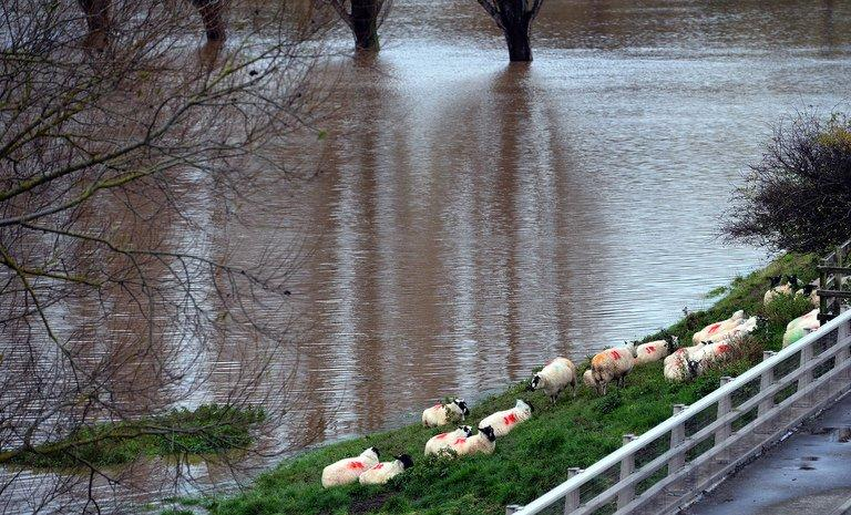 Photo illustration shows sheep huddled on higher ground near flooded fields in northern Wales. For Judeo-Christians, the flood evokes the biblical story of Noah's Ark, but the motif of a deluge sent upon man by an angry divinity stretches back deep in time