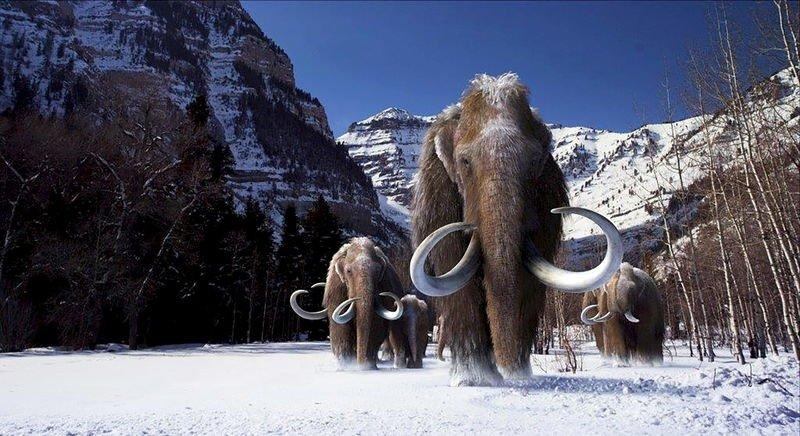 A group of woolly mammoths, the huge Ice Age mammals that lived and roamed the frigid tundra steppes of northern Asia, Europe and North America, are seen in this undated illustration provided courtesy of Giant Screen Films. REUTERS/Courtesy of Giant Screen Films, copyright 2012 D3D Ice Age, LLC/Handout via Reuters