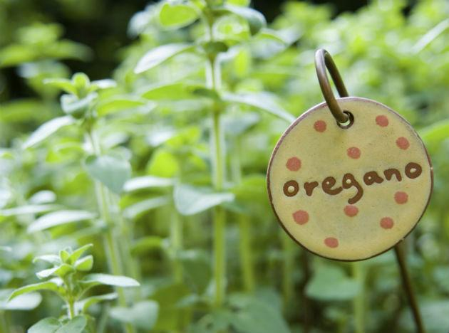 <b>Oregano </b>is good for more than just Pizza seasoning. It contains caffeic acid, quercitin and rosmarinic acid. These compounds are known to be effective in combating depression. They also help you in rejuvenating and calming down.