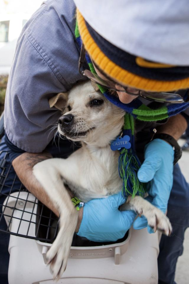 Front Street Animal Shelter animal care technician Roberson loads a dog into a crate in Sacramento