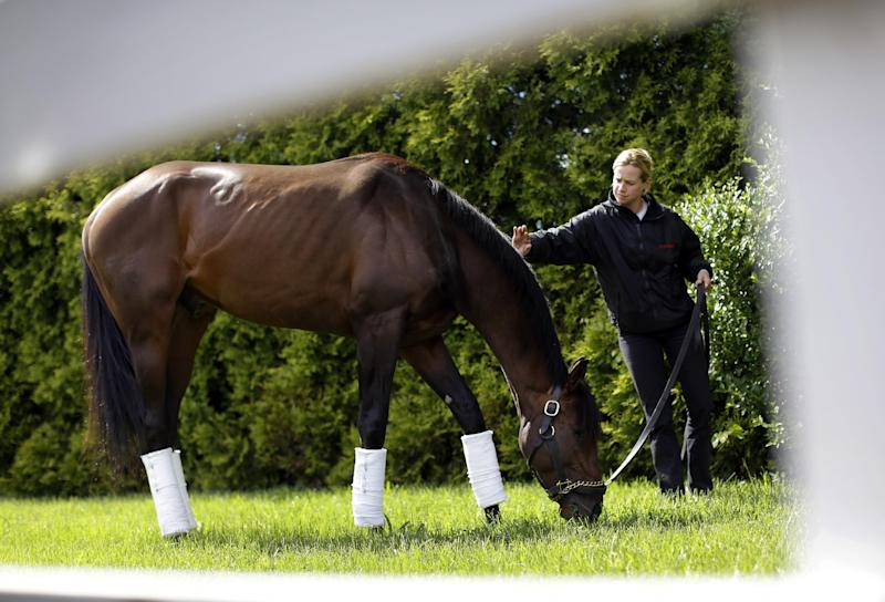 Kentucky Derby winner Orb is seen past a wooden fence as he grazes with exercise rider Jennifer Patterson after arriving at Pimlico Race Course in Baltimore, Monday, May 13, 2013. Orb is scheduled to run in the Preakness Stakes on May 18. (AP Photo/Patrick Semansky)