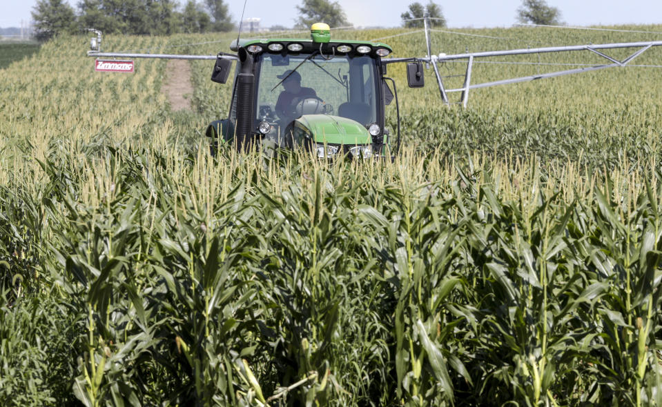 Farmer Tim Novotny, of Wahoo, shreds male corn plants in a field of seed corn, in Wahoo, Neb., Tuesday, July 24, 2018. The Trump administration announced it will provide $12 billion in emergency relief to ease the pain of American farmers slammed by President Donald Trump's escalating trade disputes with China and other countries. (AP Photo/Nati Harnik)