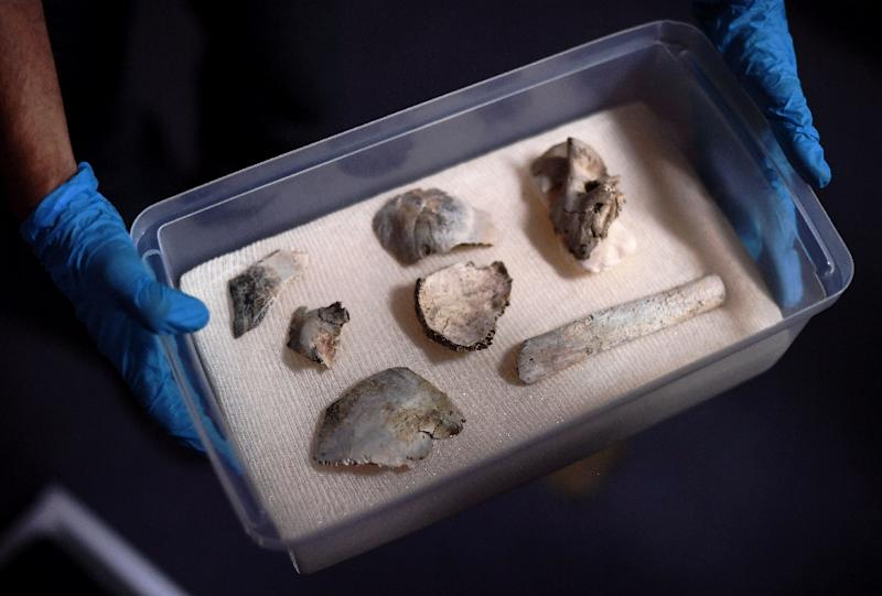 Oldest Brazilian fossil found in debris of National Museum