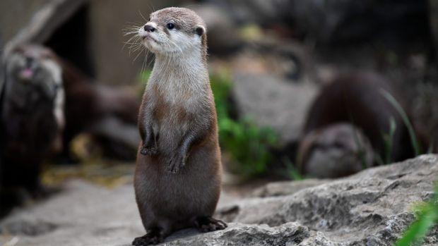 A two-month-old otter pup