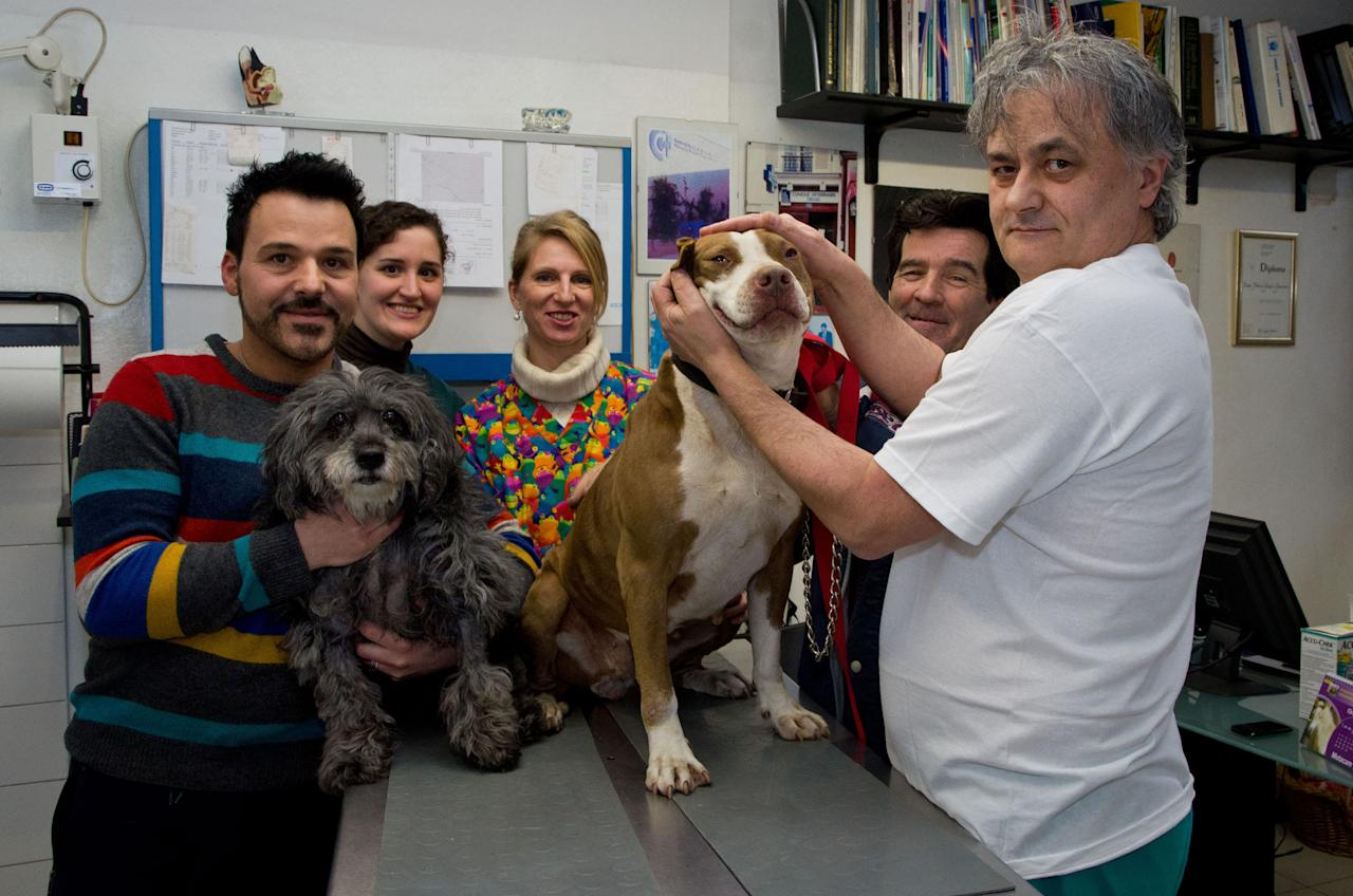 PIC FROM MILESTONE MEDIA / CATERS NEWS - (Pictured Omar Mozzi with Sissy and the vets who helped save her) - A poorly pup has been given a new LEASH of life after an extremely rare blood transfusion with a fellow pooch. Sissy, an 18-year-old mongrel was saved from the brink of death thanks to Sandy the Pitbull who stepped in to save the plucky pup. Despite beating mammary cancer following an operation last Summer, Sissy was struck down with ill health again after recently being diagnosed with anaemia. SEE CATERS COPY. ** UK, USA AND AUSTRALIA USE AND SALES ONLY **