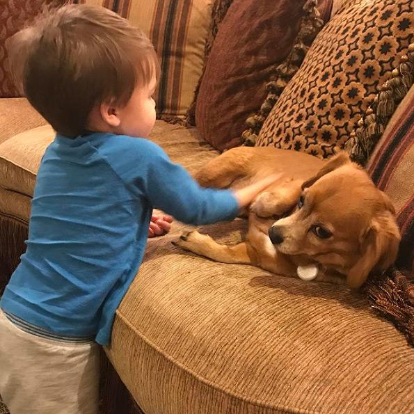 """<p><a rel=""""nofollow"""" href=""""https://www.instagram.com/p/BPlywzwD4w1/"""">Bring on the belly rubs!</a> """"I half expected these two to clash, but with lots of carefully watched playtime and working hard to teach both how to treat each other, we've managed to do alright!"""" Underwood wrote of her son and dog Penny's relationship. """"I even think they might [heart] each other!""""</p>"""