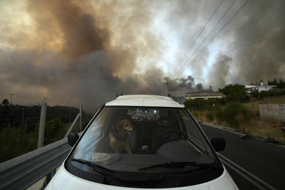 A dog sits inside a car as wildfire burns in Agios Stefanos, in northern Athens, Greece, Friday, Aug. 6, 2021. Thousands of people have fled wildfires burning out of control in Greece and Turkey, including a major blaze just north of the Greek capital of Athens that left one person dead. (AP Photo/Petros Karadjias)
