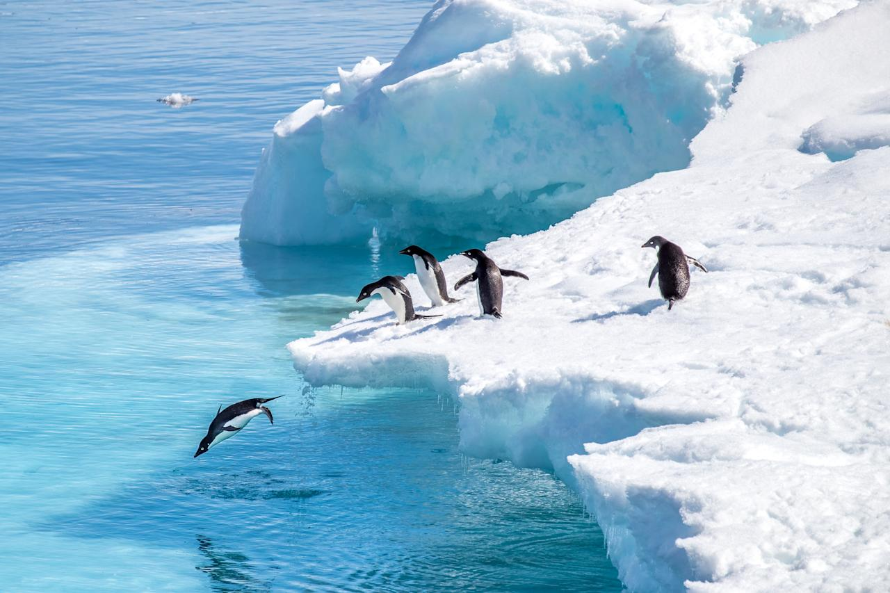 """How about seeing all the penguins, icebergs and mountains the Antarctic has to offer – but with added adventure? <a href=""""https://www.pura-aventura.com/latin-america/antarctica/active-antarctic-cruise-small-ship-adventure"""">Pura Aventura</a> has a 17-day trip perfect for those who love the idea of the spectacular landscapes and wildlife of Antarctica, but dislike sedentary cruises. During the ten days at sea, you'll float by kayak amongst icebergs and fur seals and snowshoe up peaks for incredible vistas of untouched wilderness. Unlike most traditional cruises, you'll also spend a night camping on the mainland. The price, from £9,150pp, includes all accommodation, meals and activities, internal flights and a private city tour Buenos Aires. Departs on selected dates between November and March. <em>[Photo: Getty]</em>"""