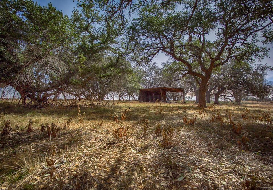 """<p>The story goes that just outside Brownsville, Texas, there is an abandoned girls camp that was the site of a brutal mass murder. One of the camp counselors allegedly went insane, killing several of the campers. The camp was shut down and <a href=""""https://www.wideopencountry.com/texas-legends-haunted/"""" rel=""""nofollow noopener"""" target=""""_blank"""" data-ylk=""""slk:those who visit"""" class=""""link rapid-noclick-resp"""">those who visit</a> say they hear the ghostly sounds of children crying late at night.</p>"""
