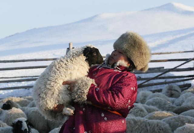 <p>Tanzurun Darisyu, head of a Tuvan private farm located in the Kara-Charyaa area south of Kyzyl town, the administrative center of the Republic of Tuva, holds a lamb in southern Siberia, Russia, on Feb. 14, 2018. (Photo: Ilya Naymushin/Reuters) </p>