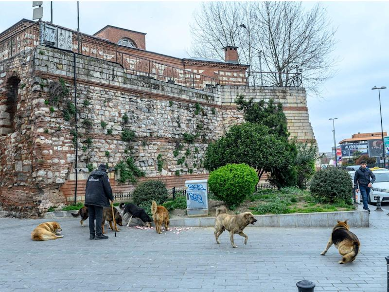 A man feeds street dogs at Eminonu Square in central Istanbul, deserted due to the novel coronavirus outbreak on March 26.