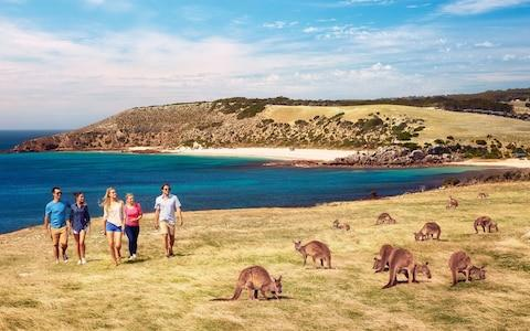 While the island's human population is around 4,400, there are some 60,000 resident kangaroos - Credit: Tourism Australia