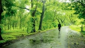 Survival of transplanted trees should improve, MMRCL told