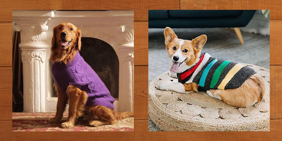"""<p>One of the best things about dogs is their warm, fluffy coats—but even our furry friends get cold sometimes! Luckily there are plenty of cute dog sweaters that will keep your pup feeling cozy and looking just plain adorable. If you feel a little silly buying clothes for your dog, rest assured that you're in very good company. Even Ree has been known to dress up <a href=""""https://www.thepioneerwoman.com/home-lifestyle/pets/g32732863/ree-drummond-dogs-facts-photos/"""" rel=""""nofollow noopener"""" target=""""_blank"""" data-ylk=""""slk:her basset hounds"""" class=""""link rapid-noclick-resp"""">her basset hounds</a> from time to time! </p><p>As with human clothes, there are tons of options when it comes to shopping for stylish sweaters for furry BFFs, and they come in all sizes from <a href=""""https://www.thepioneerwoman.com/home-lifestyle/pets/g36592631/small-fluffy-dog-breeds/"""" rel=""""nofollow noopener"""" target=""""_blank"""" data-ylk=""""slk:small fluffy dogs"""" class=""""link rapid-noclick-resp"""">small fluffy dogs</a> to <a href=""""https://www.thepioneerwoman.com/home-lifestyle/pets/g35482456/medium-sized-dog-breeds/"""" rel=""""nofollow noopener"""" target=""""_blank"""" data-ylk=""""slk:medium-sized dog breeds"""" class=""""link rapid-noclick-resp"""">medium-sized dog breeds</a> and larger. You can pick something super warm and functional, or get a fashion-forward sweater that reflects your pup's personality. Here, you can choose from a variety of styles like preppy or sporty; you can pick from almost any color; and you can shop a mix of materials, like fleece, wool, or cotton. There are even matching dog-and-human sweater sets so you can twin with your pet! </p><p>Once you've made sure your dog is nice and bundled up in their new sweater, be sure to pick out a fun <a href=""""https://www.thepioneerwoman.com/holidays-celebrations/g33383101/funny-dog-halloween-costumes/"""" rel=""""nofollow noopener"""" target=""""_blank"""" data-ylk=""""slk:Halloween costume"""" class=""""link rapid-noclick-resp"""">Halloween costume</a> for them to wear this year, and maybe even"""