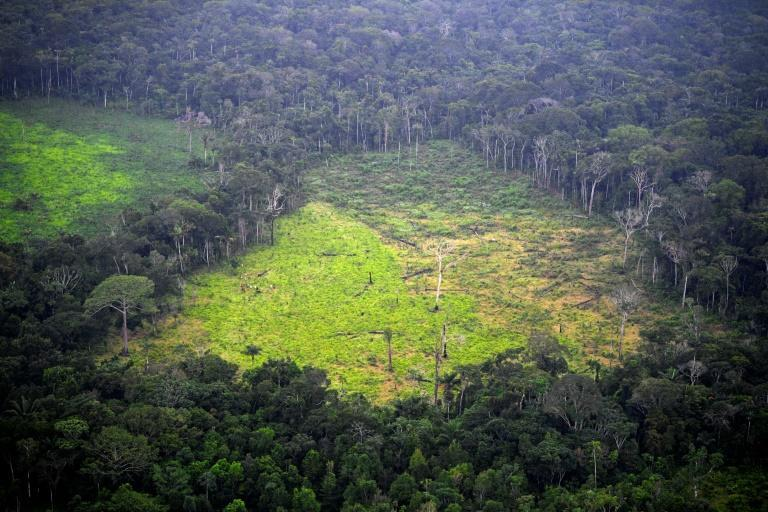 Swathes of forest continue to be flattened each year mainly due to industrial-scale agriculture