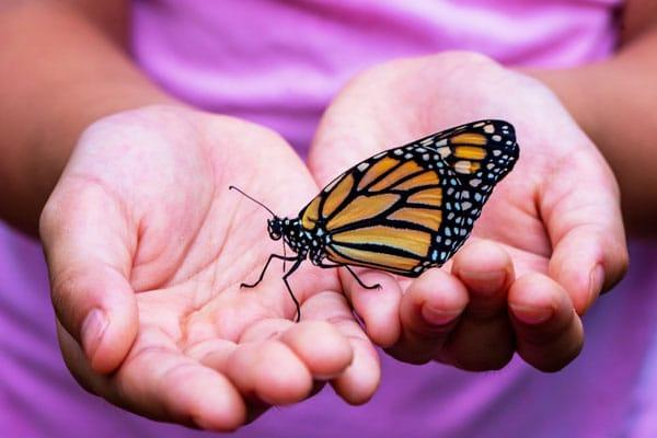 Start Planning Your Butterfly Garden Now: child holding butterfly