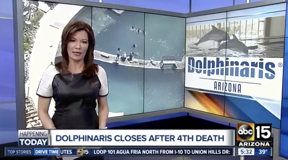 A still frame of the ABC 15 Arizona news on the Dolphinaris closure. In the background are stills from the dolphin park.