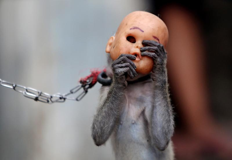 AP10ThingsToSee - A street monkey wears a baby doll mask as it performs in a slum in Jakarta, Indonesia, Thursday, Oct. 24, 2013. Security forces are fanning out across Jakarta conducting raids to rescue macaques used in popular street masked monkey performances in a move aimed at improving public order and preventing diseases carried by the monkeys. (AP Photo/Tatan Syuflana, File)