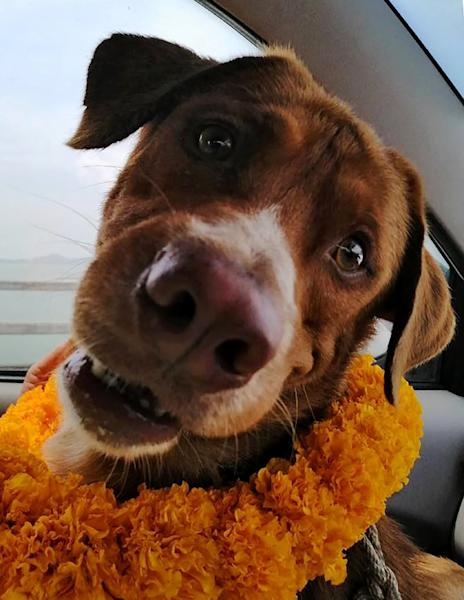 Boonrod the dog was welcomed on the shore with a lei of yellow flowers and lots of neck scratches from port workers (AFP Photo/Handout)