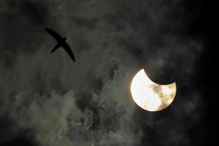 A bird flies next to a partial solar eclipse in St. Petersburg, Russia, on June 10, 2021. / Credit: Peter Kovalev/TASS/Getty Images
