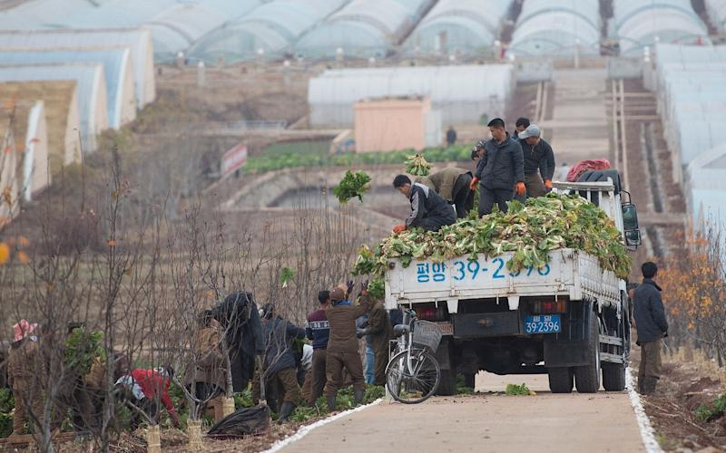 The Kimchi harvest in North Korea - © Eddie Mulholland