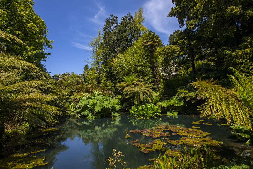 A beautiful view of a lake in the Jungle area of the Lost Gardens of Heligan in Cornwall, UK.