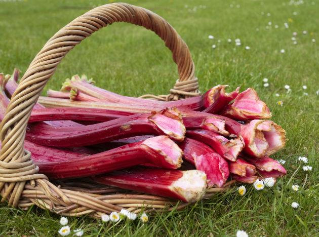 <b>Rhubarb</b>: Rhubarb is a plant with edible and flavorsome stems which are used as a part of a number of desserts. However the leaves of this plant contain an acid which is very harmful in nature. <br>Being observant about the quality and nature of food you consume is particularly imperative. Having complete knowledge and information about unusual foods is another important point to be taken care of.