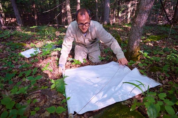 """<span class=""""caption"""">Middlebury Assistant Professor David Allen prepares to inspect a piece of canvas dragged through the forest to collect ticks. </span> <span class=""""attribution""""><a class=""""link rapid-noclick-resp"""" href=""""http://www.middlebury.edu/newsroom/archive/2018-news/node/579261"""" rel=""""nofollow noopener"""" target=""""_blank"""" data-ylk=""""slk:Todd Balfour/Middlebury College"""">Todd Balfour/Middlebury College</a></span>"""